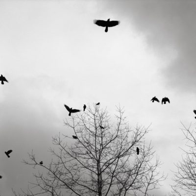 Crows - Austin Granger