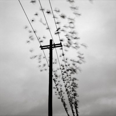 Telephone Pole with Birds - Austin Granger